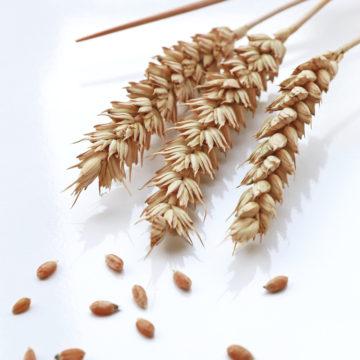 Getreide & Mehle